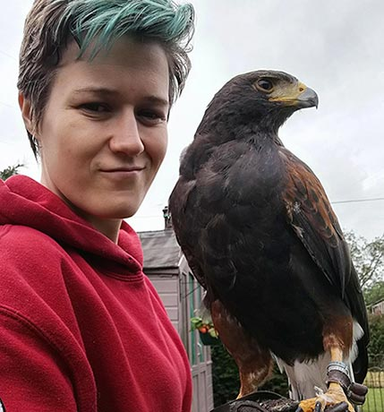 Harley the Harris hawk